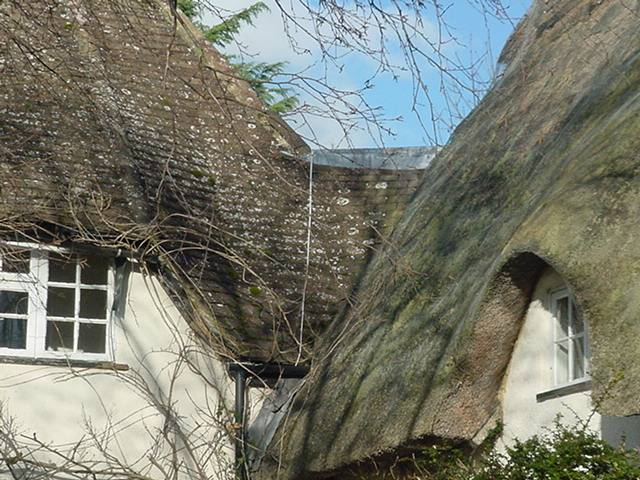 Thatch roof in need of repair